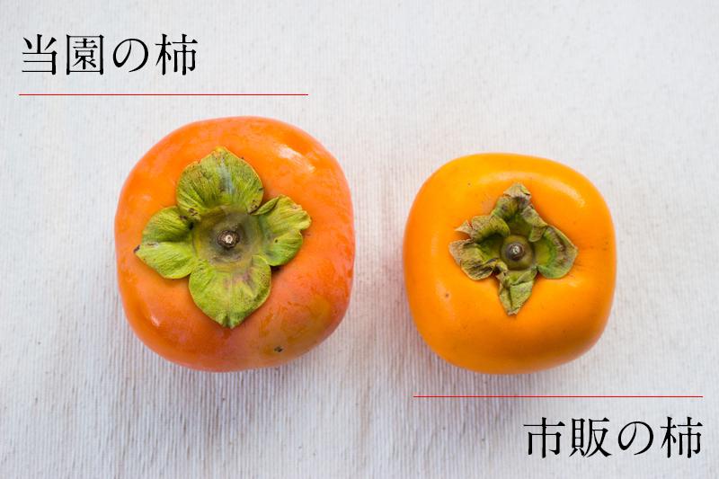 サカヤ農園の柿とスーパーの柿の違い
