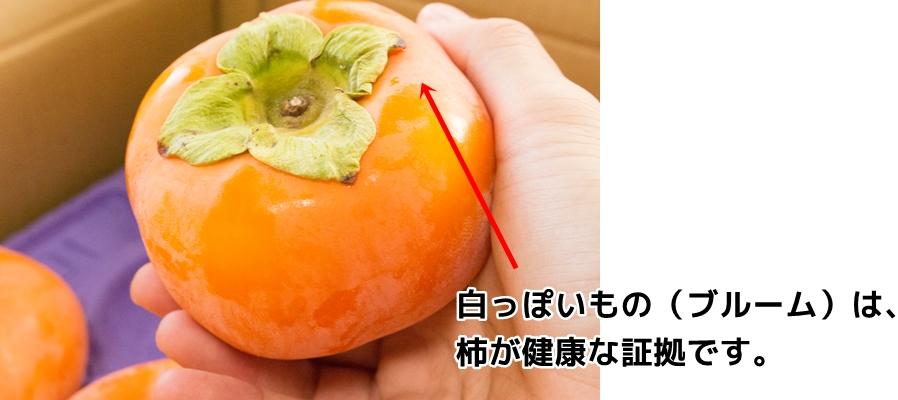ブルームは、柿が健康な証拠です