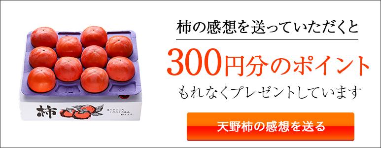 天野柿の感想投稿ページへ