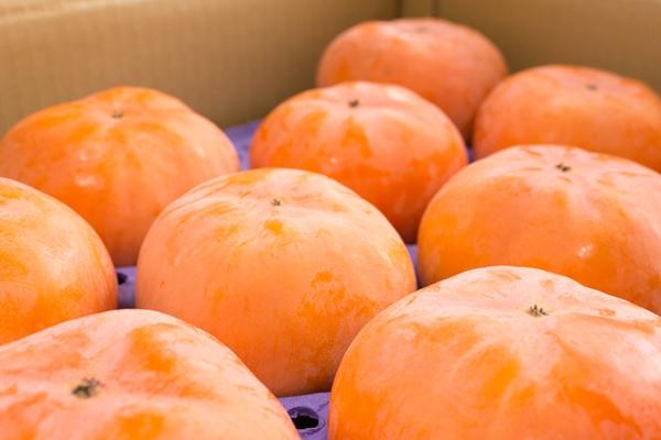 一番おいしい柿を、一番おいしい状態で食べてください