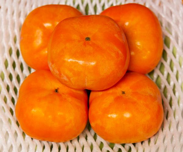 皇室献上天野柿